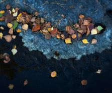 fallenleaves1510111_revised_small
